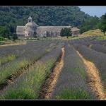 Abbaye de Sénanque par Alain Cachat - Gordes 84220 Vaucluse Provence France