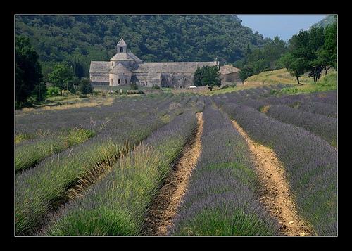 Abbaye de Sénanque par Alain Cachat
