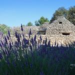 Village des Bories - lavande et cabanes par Alain Cachat - Gordes 84220 Vaucluse Provence France