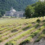 Abbaye de Sénanque by mistinguette18 - Gordes 84220 Vaucluse Provence France
