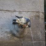 Pigeon assoiffé à la fontaine par MaJuCoMi - Gordes 84220 Vaucluse Provence France