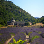 L'Abbaye de Sénanque et ses champs de lavande par CouleurLavande.com - Gordes 84220 Vaucluse Provence France