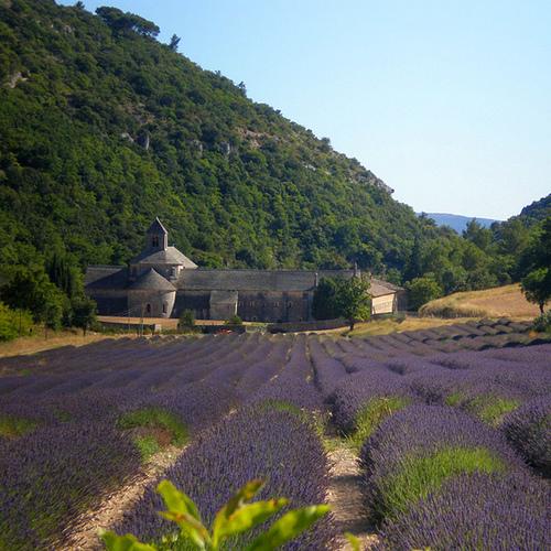 L'Abbaye de Sénanque et ses champs de lavande by CouleurLavande.com