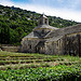 Abbaye Notre-Dame de Snanque par C.R. Courson - Gordes 84220 Vaucluse Provence France