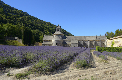 Pureté des couleurs - Lavande à l'Abbaye de Sénanque - Explore by Massimo Battesini