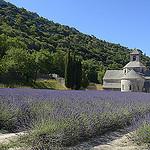 Provence - Champs de lavande à l'Abbaye de Sénanque par Massimo Battesini - Gordes 84220 Vaucluse Provence France