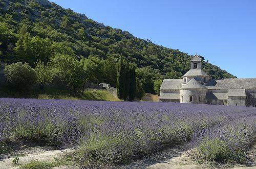 Provence - Champs de lavande à l'Abbaye de Sénanque by Massimo Battesini