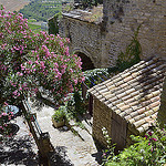 Laurier rose à Gordes by Massimo Battesini - Gordes 84220 Vaucluse Provence France