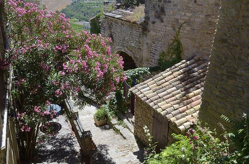 Laurier rose à Gordes par Massimo Battesini