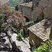 Laurier rose à Gordes par Massimo Battesini - Gordes 84220 Vaucluse Provence France