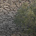 Motifs de provence - L'olivier contre le mur par Michel Seguret - Gordes 84220 Vaucluse Provence France