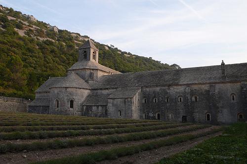 Au pied de l'Abbaye de Senanque par lepustimidus
