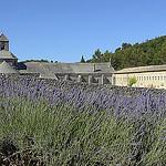Diagonale de Lavande à l'Abbaye de Sénanque par Massimo Battesini - Gordes 84220 Vaucluse Provence France
