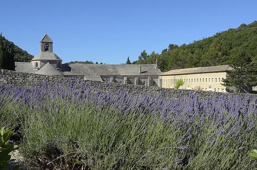 Diagonale de Lavande à l'Abbaye de Sénanque par Massimo Battesini