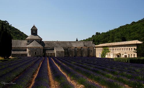 Abbaye Notre-Dame de Sénanque et sa lavande bien ordonnée par Guarda Nuvole