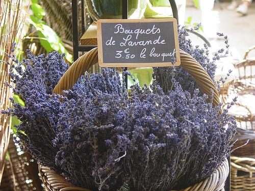 Bouquets de Lavande séchée par pietroizzo