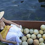 Melons de Provence sur le marché flottant de l'Isle sur la Sorgue par Massimo Battesini - L'Isle sur la Sorgue 84800 Vaucluse Provence France