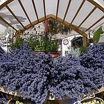 Lavande - L'Isle-sur-la-Sorgue par Massimo Battesini - L'Isle sur la Sorgue 84800 Vaucluse Provence France