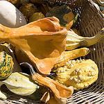 Courge market par Massimo Battesini - L'Isle sur la Sorgue 84800 Vaucluse Provence France