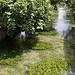 La sorgue verte par Jean NICOLET - L'Isle sur la Sorgue 84800 Vaucluse Provence France