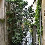 Canal de  l'isle sur la sorgue by Jean NICOLET - L'Isle sur la Sorgue 84800 Vaucluse Provence France