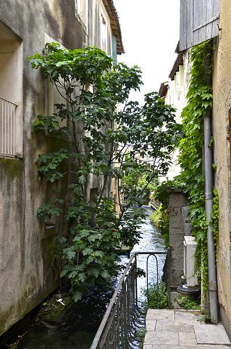 Canal de  l'isle sur la sorgue par Jean NICOLET
