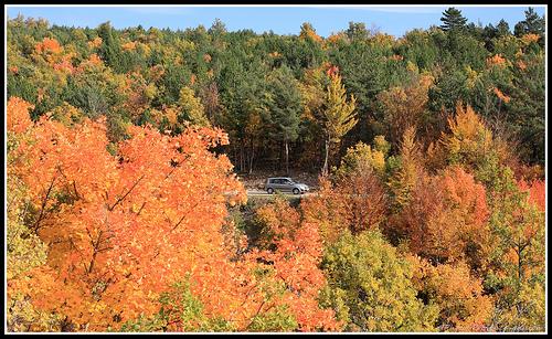 Forêt d'automne en Provence by Photo-Provence-Passion