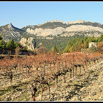Vignoble sur les Dentelles de Montmirail by Photo-Provence-Passion - La Roque Alric 84190 Vaucluse Provence France