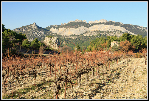 Vignoble sur les Dentelles de Montmirail by Photo-Provence-Passion