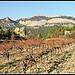 Vignoble sur les Dentelles de Montmirail par Photo-Provence-Passion - La Roque Alric 84190 Vaucluse Provence France