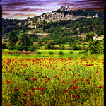 champs de coquelicots devant Lacoste par Patrick Bombaert - Lacoste 84480 Vaucluse Provence France