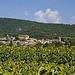 Le village de Lagnes parmi les tournesols by  - Lagnes 84800 Vaucluse Provence France