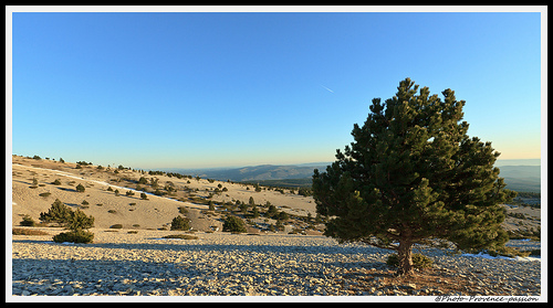 Champs de pierres du Mont-Ventoux par Photo-Provence-Passion