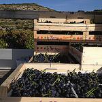 Récolte du raisin à Méthamis by gab113 - Méthamis 84570 Vaucluse Provence France