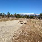 Moutons en liberté aux pieds du Ventoux par gab113 - Mormoiron 84570 Vaucluse Provence France