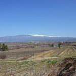Mont-Ventoux et champs de vigne en hiver par  -   Vaucluse Provence France