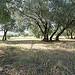 Champs de vieux oliviers by gab113 - Avignon 84000 Vaucluse Provence France