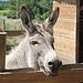 Ane qui sourit -La petite Ferme par gab113 - Villes sur Auzon 84570 Vaucluse Provence France