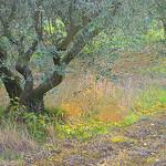 Contraste de verts par krissdefremicourt - Lourmarin 84160 Vaucluse Provence France