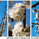 Le temps des cerises... ou presque ! by Fanette13 - Lourmarin 84160 Vaucluse Provence France