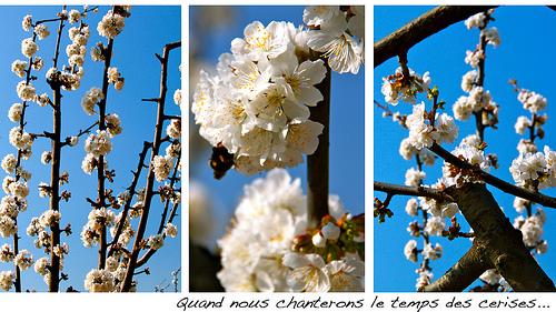 Le temps des cerises... ou presque ! by Fanette13