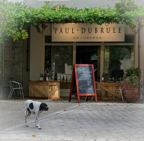 Vignoble Paul Dubrule by Ann McLeod Images