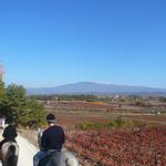 Ballade à cheval avec le Mont-Ventoux by gab113 - Mazan 84380 Vaucluse Provence France