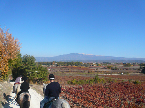 Ballade à cheval avec le Mont-Ventoux by gab113