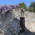 La nature déborde par Jean NICOLET - Ménerbes 84560 Vaucluse Provence France