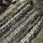 Line of Vine par Peter Gassendi - Ménerbes 84560 Vaucluse Provence France