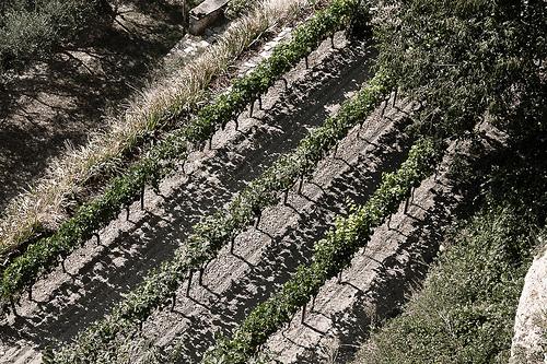 Line of Vine par Peter Gassendi