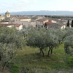 Oliviers à Mérindol par bastidegrandesterres - Mérindol 84360 Vaucluse Provence France