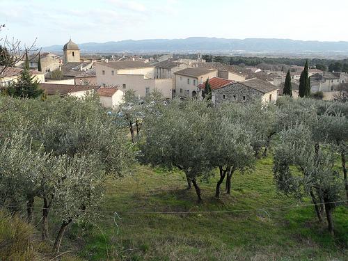 Oliviers à Mérindol by bastidegrandesterres