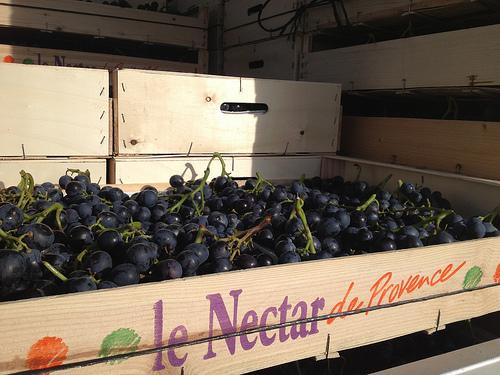 Le Nectar de Provence : le muscat par gab113